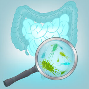 micro organisms in the human digestive system Aids our digestive system: bacteria offer multiple benefits inside the human body  in the digestive system, they help break down food like plant.